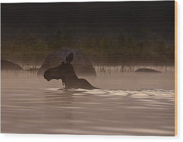 Moose Swim Wood Print by Brent L Ander