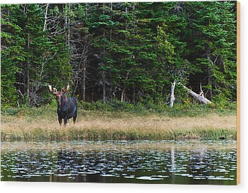 Moose Wood Print by Ulrich Schade