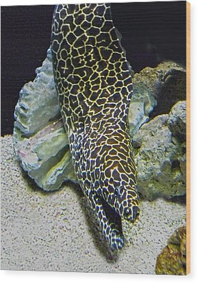 Moray Eel Wood Print by Sandi OReilly