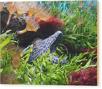 Moray Underwater Wood Print by Tilen Hrovatic