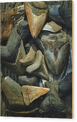 More Megalodon Teeth Wood Print by Rebecca Sherman