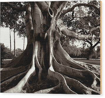 Moreton Bay Fig Wood Print by Timothy Bulone