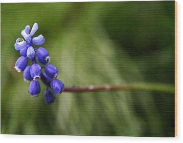 Morning Blue Wood Print by Kim Lagerhem