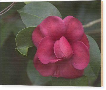 Wood Print featuring the photograph Morning Camellia by Penny Lisowski