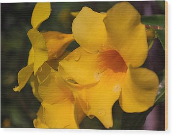Wood Print featuring the photograph Morning  Delight by Miguel Winterpacht