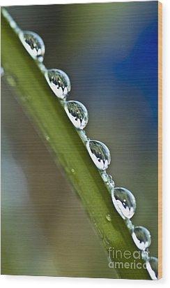 Morning Dew Drops 2 Wood Print by Heiko Koehrer-Wagner