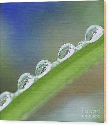 Morning Dew Drops Wood Print by Heiko Koehrer-Wagner