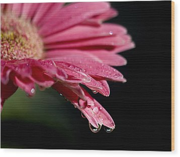 Wood Print featuring the photograph Morning Dew by Joe Schofield