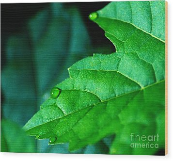 Wood Print featuring the photograph Morning Dew by JRP Photography