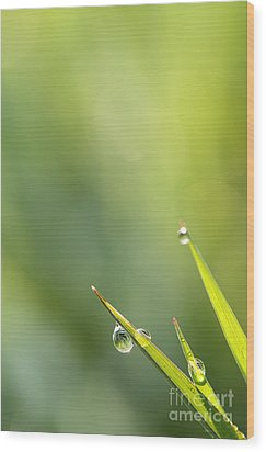 Morning Dew On Grass Wood Print by LHJB Photography