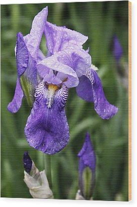 Morning Dew On The Iris Wood Print