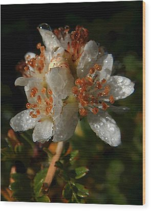 Morning Dew Wood Print by Pamela Walton