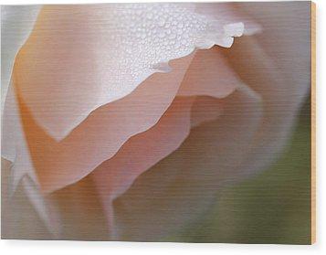 Morning Dew Peach Rose Flower Wood Print by Jennie Marie Schell