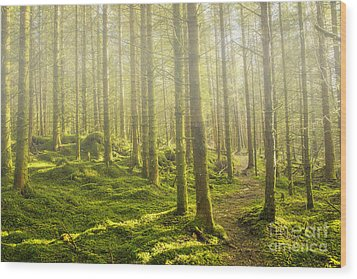 Morning Fog In The Forest Wood Print