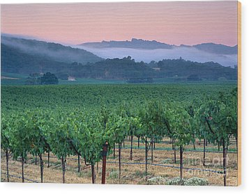 Morning Fog Over Vineyards In The Alexander Valley  Wood Print by Gary Crabbe