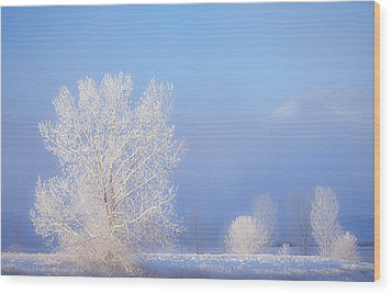 Morning Frost Wood Print by Darren  White
