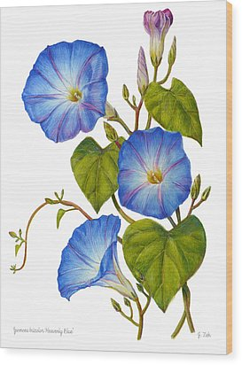 Morning Glories - Ipomoea Tricolor Heavenly Blue Wood Print