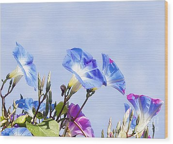 Morning Glory Flowers Wood Print