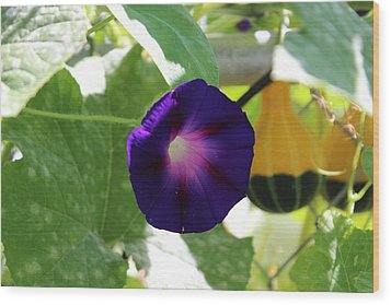 Morning Glory Wood Print