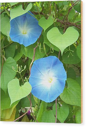 Morning Glory Wood Print by Noreen HaCohen