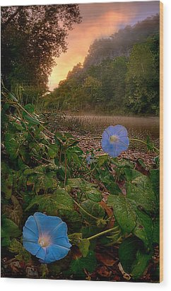 Morning Glory Wood Print by Robert Charity