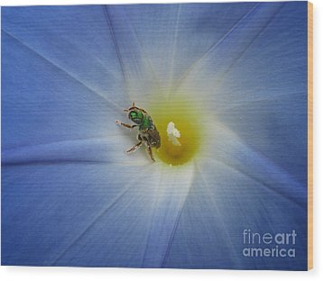 Morning Glory Visitor 1 Wood Print