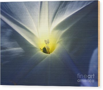 Morning Glory Visitor 2 Wood Print