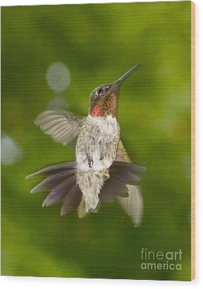 Wood Print featuring the photograph Morning Greeter II by Alice Mainville