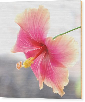 Morning Hibiscus In Gentle Light - Square Macro Wood Print