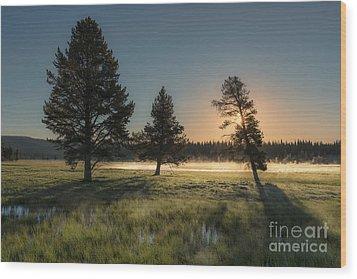 Morning Light In Yellowstone Wood Print by Sandra Bronstein