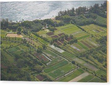 Morning Light Over Kauai Taro Fields Wood Print by Kai Hyde