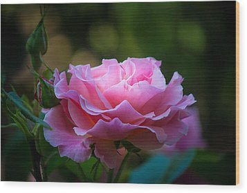 Wood Print featuring the photograph Morning Light by Patricia Babbitt
