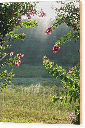 Morning Marsh Wood Print by Carol Groenen
