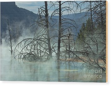 Morning Mist At Mammoth Hot Springs Wood Print by Sandra Bronstein