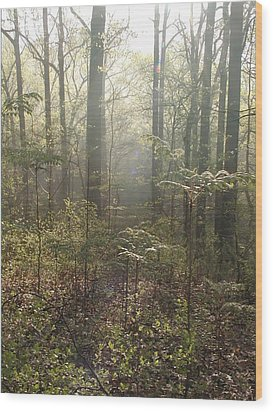 Morning Mist In The Forest Wood Print by Bill Cannon