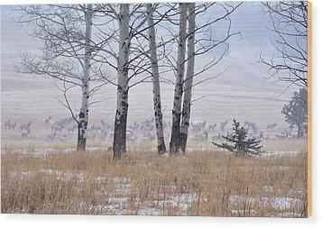 Morning Of The Elk Wood Print