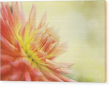 Morning Serenade Wood Print by Beve Brown-Clark Photography