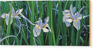 Morning Smile - Wild African Iris Wood Print by Donna Proctor