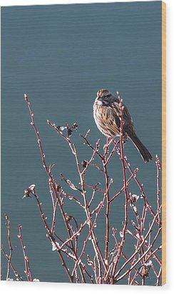Wood Print featuring the photograph Morning Sparrow by Jan Davies