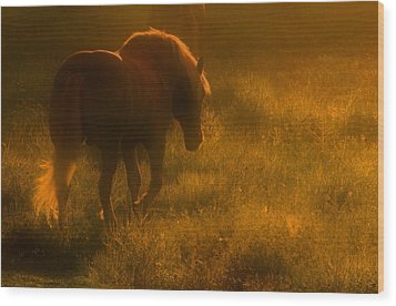 Morning Stroll Wood Print by Jim Vance