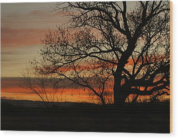 Morning View In Bosque Wood Print