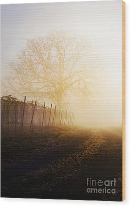 Morning Vineyard Wood Print by Shannon Beck-Coatney