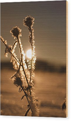 Wood Print featuring the photograph Morning Walk by Miguel Winterpacht