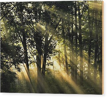 Morning Warmth Wood Print
