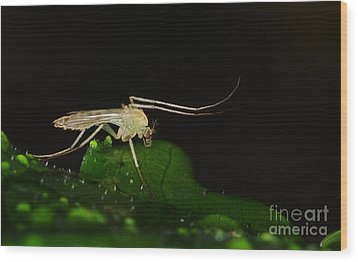 Mosquito Wood Print by Paul Ward
