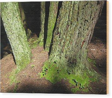 Moss Against The Shadows Wood Print