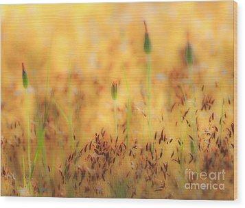 Moss And Flowers - Greensboro North Carolina Wood Print by Dan Carmichael