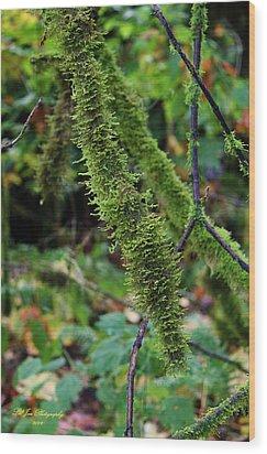 Moss Beauty Wood Print by Jeanette C Landstrom