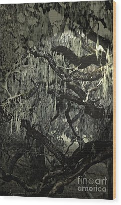 Moss Covered Oak Wood Print by Gary Brandes
