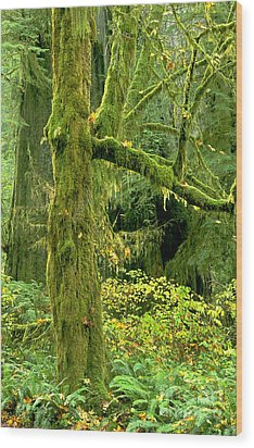 Wood Print featuring the photograph Moss Draped Big Leaf Maple California by Dave Welling